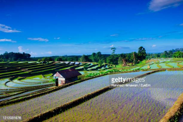 scenic view of agricultural field against blue sky - rahmad himawan stock pictures, royalty-free photos & images