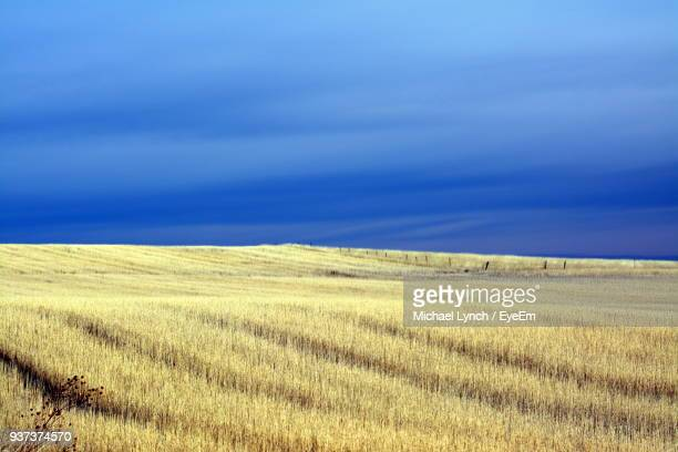 scenic view of agricultural field against blue sky - billings montana stock pictures, royalty-free photos & images