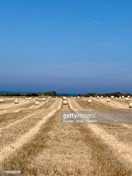 scenic view of agricultural field against clear blue sky - ウィランガ ストックフォトと画像