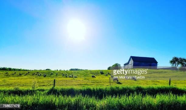 Scenic View Of Agricultural Field Against Clear Sky On Sunny Day