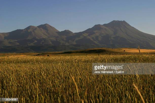 scenic view of agricultural field against clear sky - jens helmstedt stock-fotos und bilder