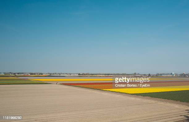 scenic view of agricultural field against clear sky - bortes stockfoto's en -beelden