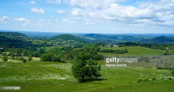 scenic view of agricultural field against clear sky - martial stock pictures, royalty-free photos & images