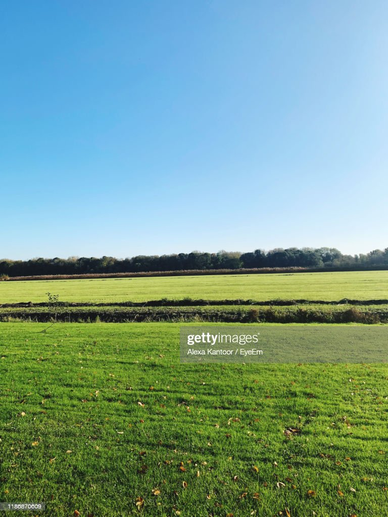 Scenic View Of Agricultural Field Against Clear Sky : Stock Photo