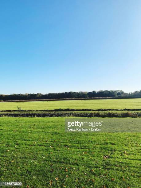 scenic view of agricultural field against clear sky - kantoor imagens e fotografias de stock