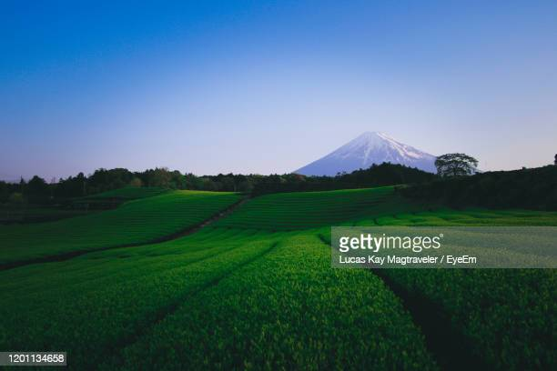 scenic view of agricultural field against clear sky - 水田 ストックフォトと画像