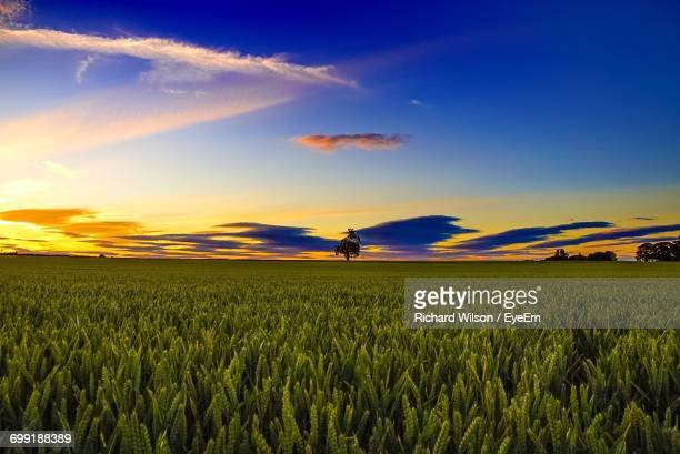 scenic view of agricultural field against clear sky - prairie stock photos and pictures
