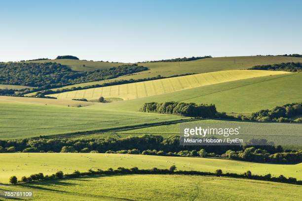 scenic view of agricultural field against clear sky - anhöhe stock-fotos und bilder
