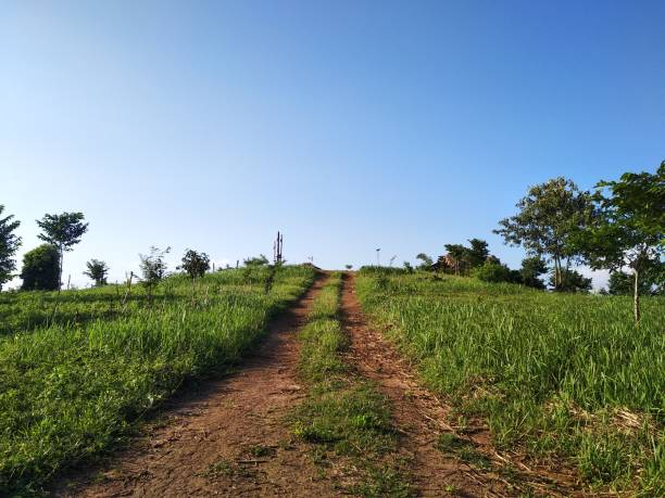 Scenic view of agricultural field against clear sky,Tura,Meghalaya,India