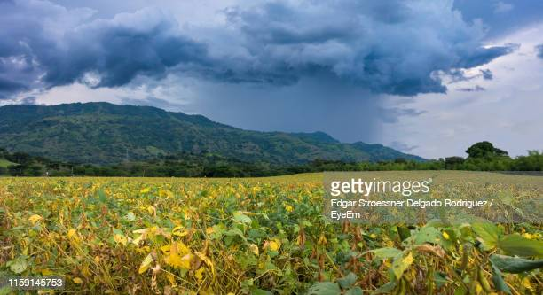 scenic view of agricultural field against cloudy sky - valle del cauca stock pictures, royalty-free photos & images