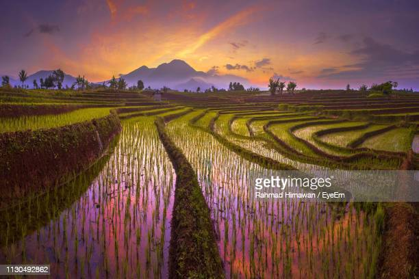 scenic view of agricultural field against dramatic sky during sunset - rahmad himawan stock photos and pictures