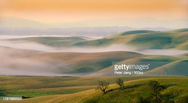 scenic view of agricultural field against sky during sunset,california,united states,usa - nature stock pictures, royalty-free photos & images