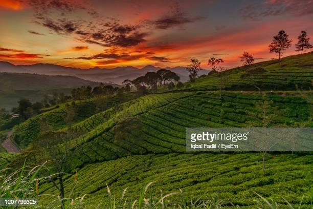 scenic view of agricultural field against sky during sunrise - bandung stock pictures, royalty-free photos & images