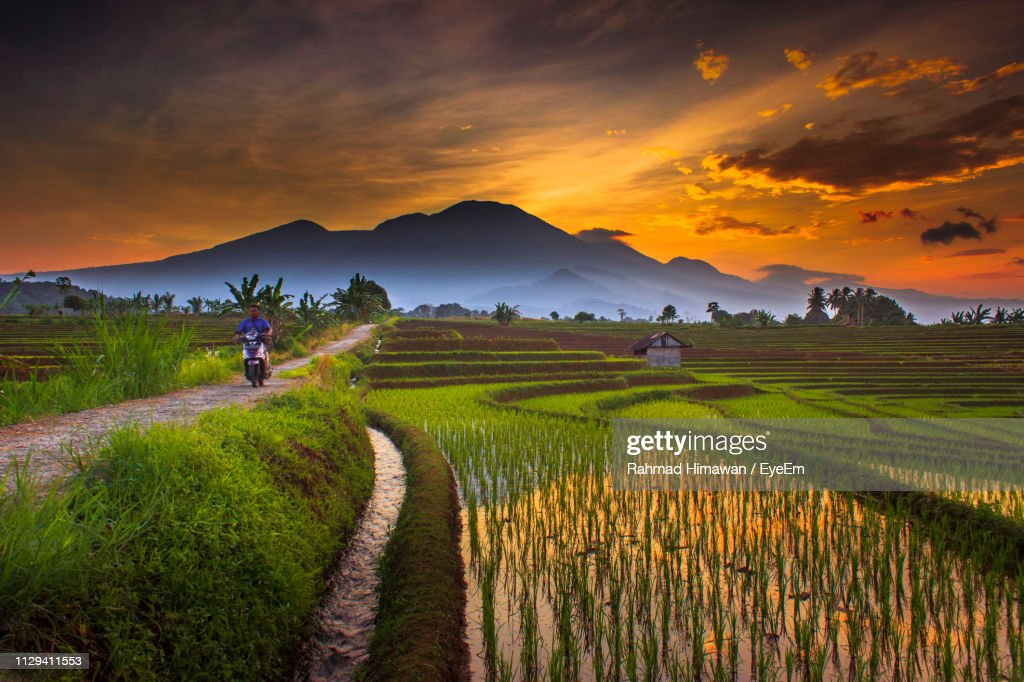 Scenic View Of Agricultural Field Against Sky During Sunset : Stock Photo