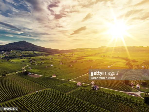 scenic view of agricultural field against sky during sunset - hungary stock pictures, royalty-free photos & images