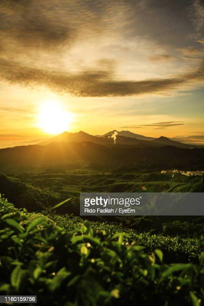 scenic view of agricultural field against sky during sunset - bogor stock pictures, royalty-free photos & images