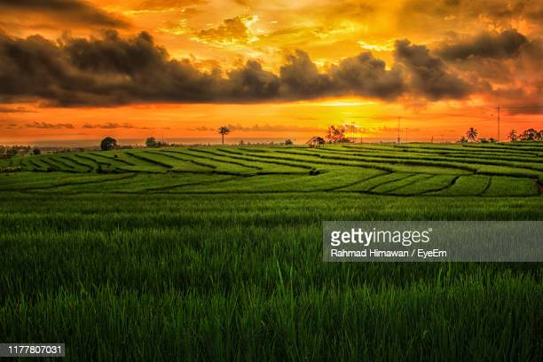 scenic view of agricultural field against sky during sunset - rahmad himawan fotografías e imágenes de stock