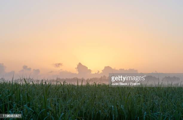 scenic view of agricultural field against sky during sunset - sugar cane stock pictures, royalty-free photos & images