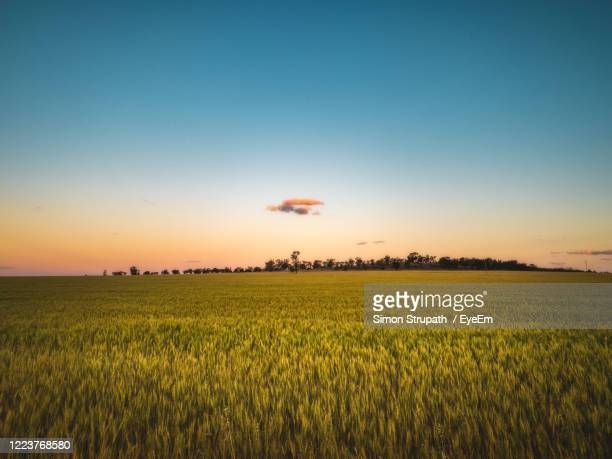 scenic view of agricultural field against sky during sunset - wagga wagga stock pictures, royalty-free photos & images