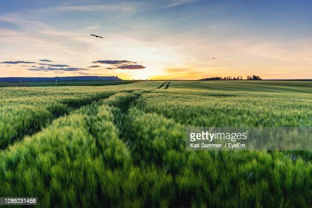 scenic view of agricultural field against sky during sunset - feld stock-fotos und bilder