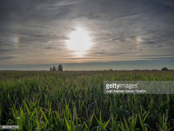 Scenic View Of Agricultural Field Against Sky During Sunset
