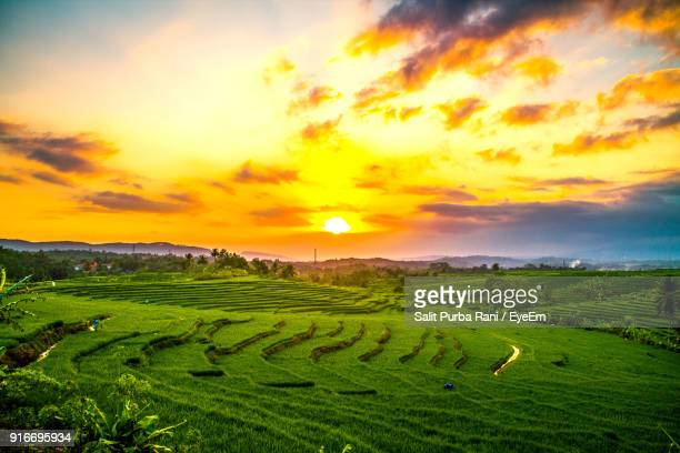 scenic view of agricultural field against sky during sunset - reisterrasse stock-fotos und bilder