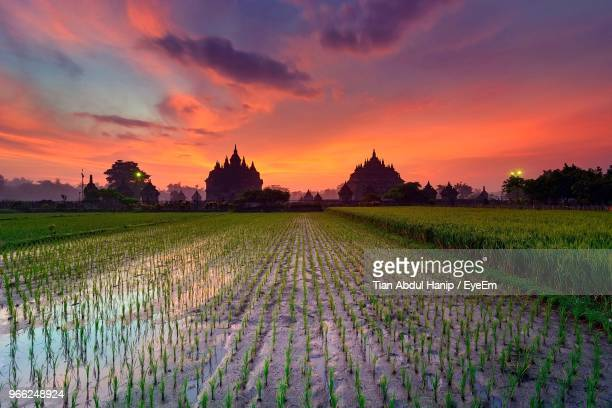 scenic view of agricultural field against sky during sunset - tian abdul hanip stock photos and pictures