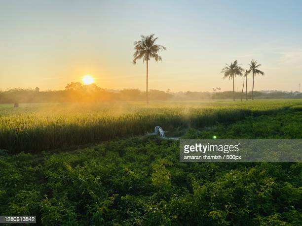 scenic view of agricultural field against sky during sunset,tamil nadu,india - images stock pictures, royalty-free photos & images