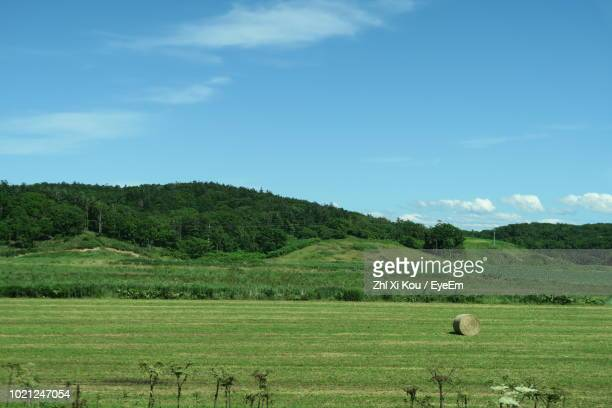 scenic view of agricultural field against sky - 郊外の風景 ストックフォトと画像