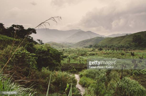 scenic view of agricultural field against sky - cameroun photos et images de collection