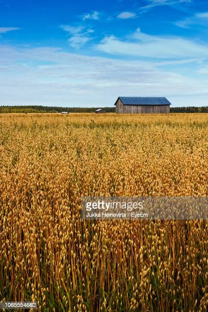 scenic view of agricultural field against sky - heinovirta stock photos and pictures