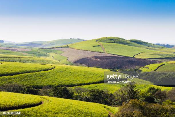 scenic view of agricultural field against sky - ダーバン ストックフォトと画像