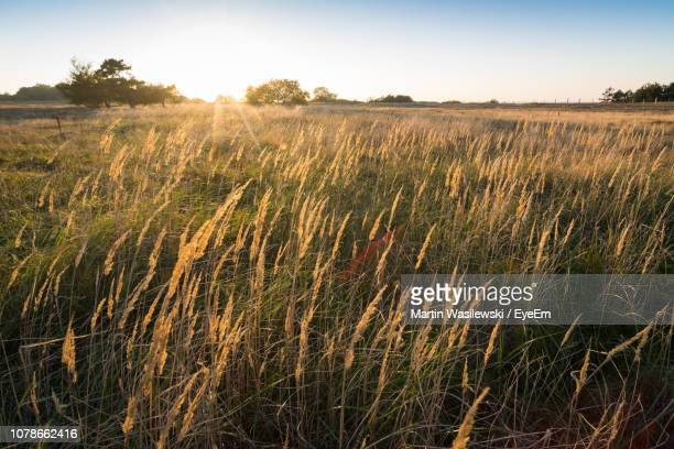 scenic view of agricultural field against sky - mecklenburg vorpommern stock pictures, royalty-free photos & images