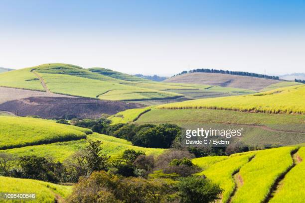 scenic view of agricultural field against sky - durban stock pictures, royalty-free photos & images