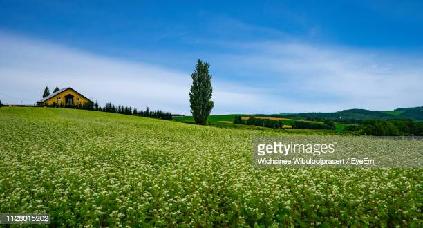 scenic view of agricultural field against sky - biei town stock pictures, royalty-free photos & images