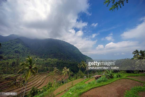 scenic view of agricultural field against sky - shaifulzamri stockfoto's en -beelden