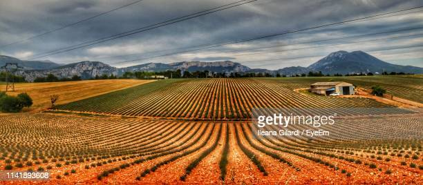 scenic view of agricultural field against sky - gilardi stock-fotos und bilder