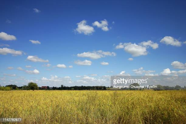scenic view of agricultural field against sky - aungsumol stock pictures, royalty-free photos & images