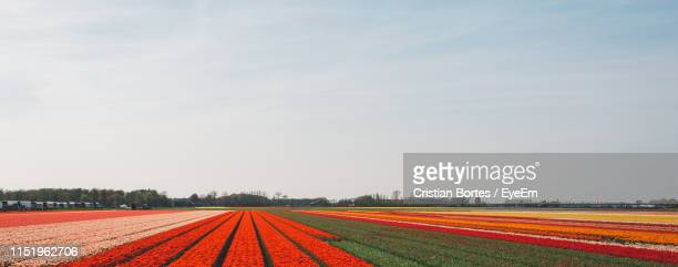 scenic view of agricultural field against sky - bortes stock photos and pictures