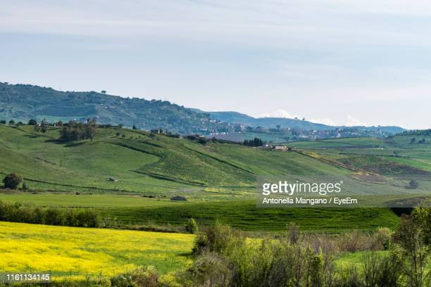 scenic view of agricultural field against sky - antonella stock photos and pictures