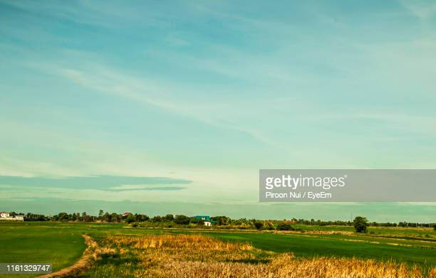 scenic view of agricultural field against sky - thai mueang photos et images de collection