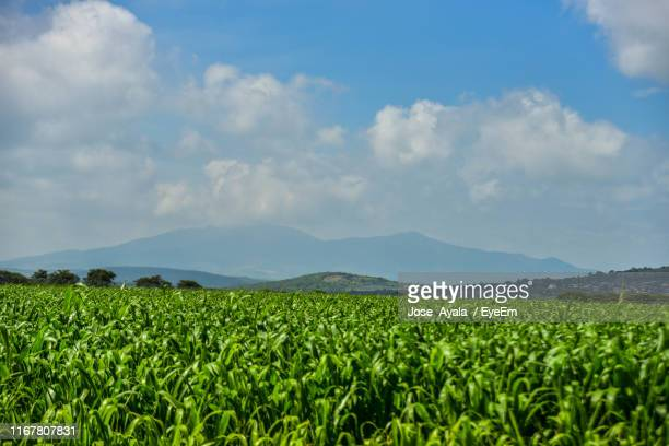 scenic view of agricultural field against sky - jose ayala stock pictures, royalty-free photos & images