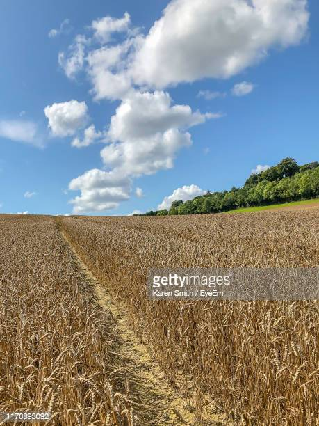 scenic view of agricultural field against sky - ハイウィッカム ストックフォトと画像