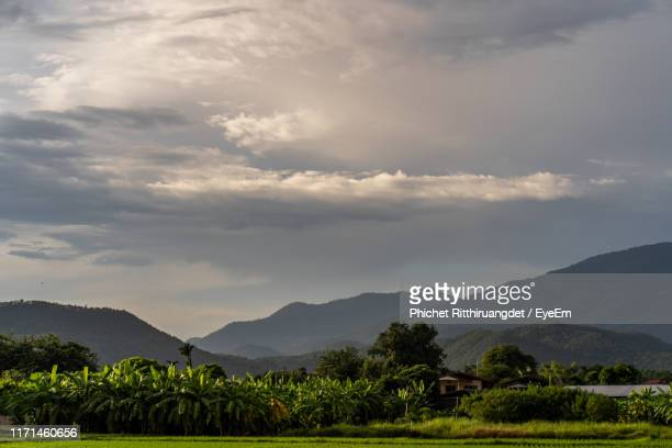 scenic view of agricultural field against sky - phichet ritthiruangdet stock photos and pictures