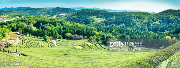scenic view of agricultural field against sky - gwangju stock pictures, royalty-free photos & images