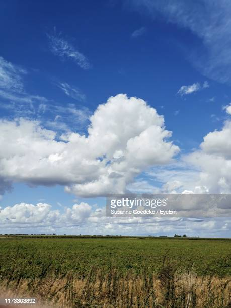scenic view of agricultural field against sky - alleen lucht stockfoto's en -beelden