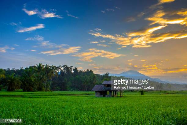 scenic view of agricultural field against sky - rahmad himawan stock photos and pictures
