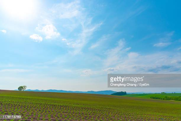 scenic view of agricultural field against sky - zonnig stockfoto's en -beelden