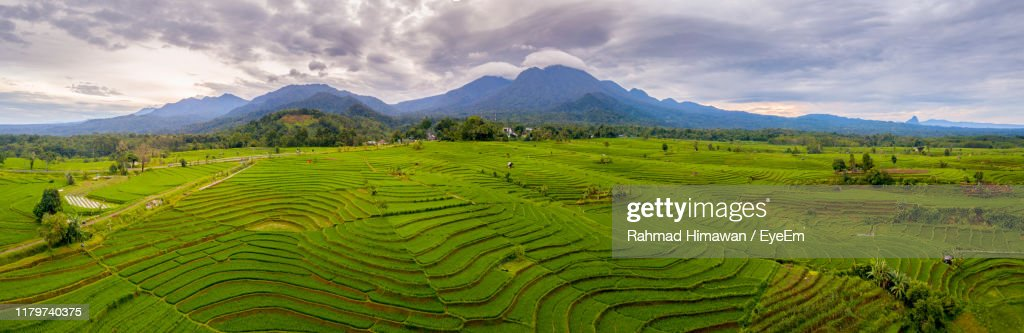 Scenic View Of Agricultural Field Against Sky : Stock Photo