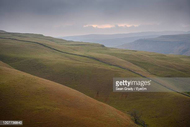 scenic view of agricultural field against sky - tea crop stock pictures, royalty-free photos & images